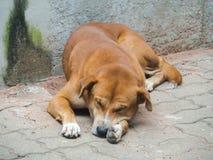Le chien égaré Photo stock