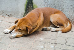 Le chien égaré photos libres de droits