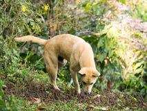 Le chien égaré Photo libre de droits