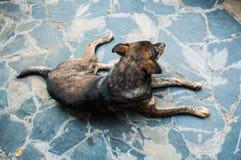Le chien égaré dans la rue Photo stock