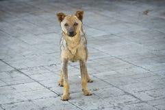 Le chien égaré a récupéré de la teigne tonsurante se tenant sur un trottoir Photographie stock