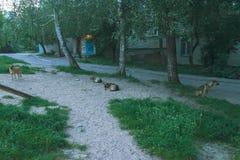 le chien égaré se reposent sur la rue au fond de personnes Image libre de droits