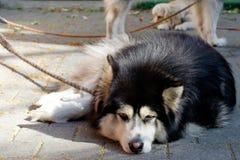 Le chien a été enchaîné en dehors de la maison Image stock