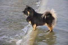 Le chien Photo libre de droits