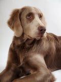 Le chien Photographie stock
