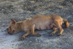 Le chien abandonné dort au sol Photo libre de droits