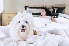 Le chien accompagne son propriétaire dormant sur le lit Photographie stock