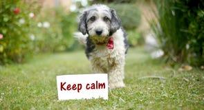 Le chien adopté noir et blanc mignon Images libres de droits