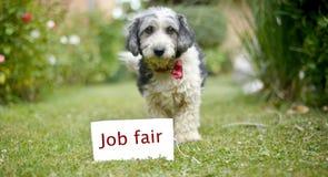 Le chien adopté noir et blanc mignon Photographie stock libre de droits