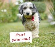 Le chien adopté noir et blanc mignon Photo stock