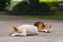 Le chien affamé se trouve vers le bas attendant le patron De retour du travail image libre de droits