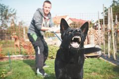 Le chien agressif aboie Photo stock