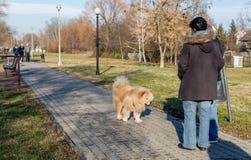 Le chien amical de bouffe de bouffe marchent en parc et deviennent au courant des personnes photographie stock libre de droits