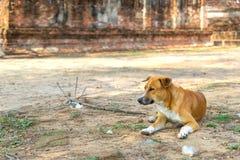 Le chien apprivoisé s'est trouvé sur le plancher poussiéreux en Thaïlande photographie stock libre de droits