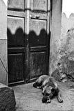Le chien attend le propriétaire Photographie stock libre de droits