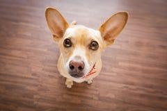 Le chien attend le propriétaire images libres de droits