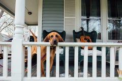 Le chien attend le propriétaire sur le porche Photographie stock