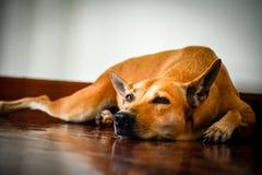 Le chien attendant le propriétaire pour retourner à la maison photographie stock libre de droits