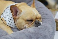 Le chien avec bonheur de sommeil Photos stock