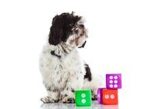 Le chien avec découpe d'isolement sur le jouet blanc de fond Photo libre de droits