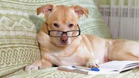 Le chien avec des verres r?serve vieux d'isolement par ?ducation de concept clips vidéos