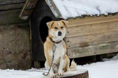 Le chien avec la morsure fausse se repose dans le froid photographie stock libre de droits