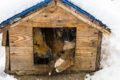 Le chien avec son chiot s'est caché dans la cabine images stock