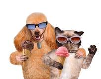 Le chien avec un chat mangent la crème glacée  Photos libres de droits