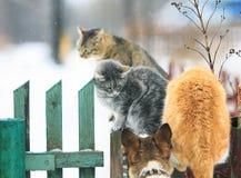 Le chien a chassé des chats sur une barrière en bois dans le village Images libres de droits