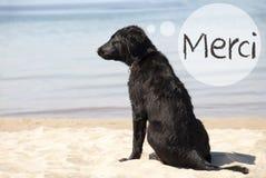Le chien chez Sandy Beach, moyens de Merci vous remercient photographie stock libre de droits