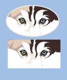 Le chien coloré observe le chien de traîneau photo libre de droits