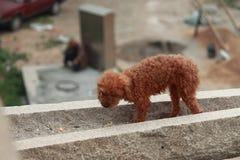 Le chien courageux mâche quelque chose sur la grande taille Photos libres de droits