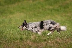 Le chien courant se déplace parti photo stock