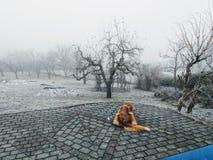 Le chien désespéré attend dans le froid son propriétaire qui est parti et a disparu dans la brume photos libres de droits