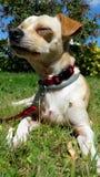 Le chien détendent le jardin Image stock