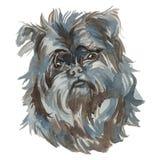 Le chien d'Affenpinscher Illustration Stock