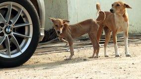 Le chien d'attaque de virus, se ferment vers le haut des chiens de rue recherchant l'appareil-photo clips vidéos