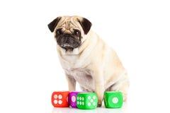 Le chien d'isolement sur le fond blanc découpe le jouet Photo stock