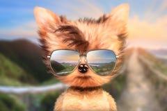 Le chien dans des lunettes de soleil se tiennent à l'arrière-plan avant de voyage Photographie stock libre de droits