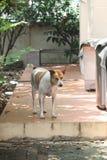 Le chien dans ma maison Photo libre de droits