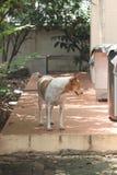 Le chien dans ma maison Photos libres de droits