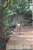 Le chien dans ma maison Photo stock