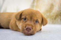 Le chien de bébé Images libres de droits