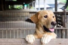 Le chien de Brown s'est tenu et attente au-dessus de la cage Image stock