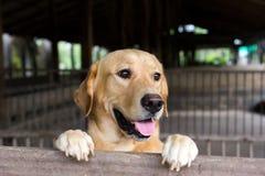Le chien de Brown s'est tenu et attente au-dessus de la cage Photos libres de droits