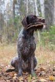 Le chien de chasse se repose avec une aile de canard photo libre de droits