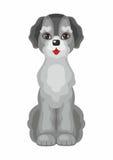 Le chien de labradoodle Image stock