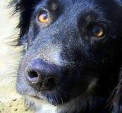 le chien de plage Images libres de droits