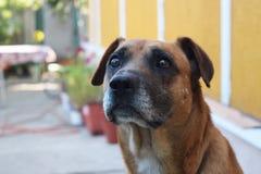 Le chien de sentinelle se protège Photo stock