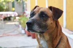 Le chien de sentinelle se protège Image libre de droits